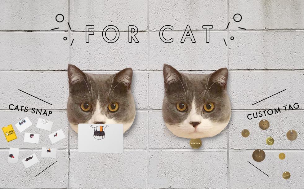 FOR CAT特集