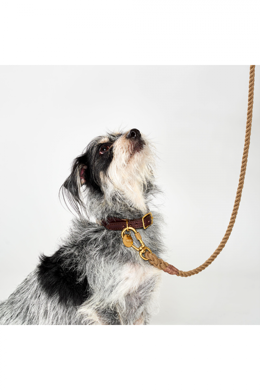 Recycle Rope Dog Leash Adjustable