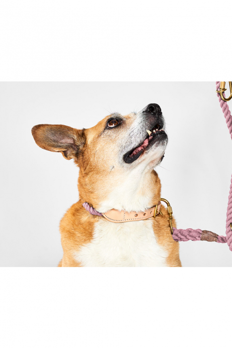 Cotton Rope Cat & Dog Collar