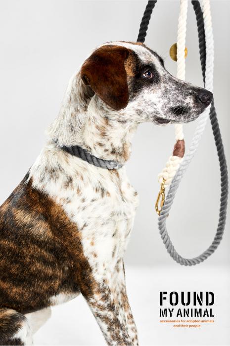 Nylon Rope Cat & Dog Collar