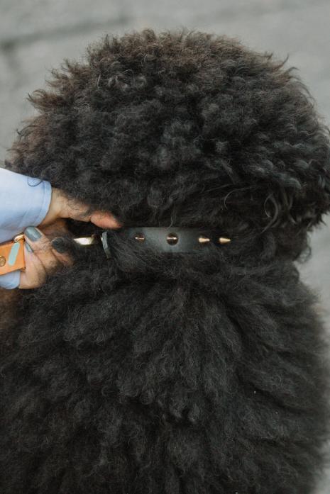 SPIKE DOG COLLAR/XSサイズ