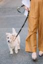 CHIARO DOG COLLAR/Mサイズ