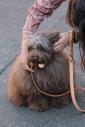 MEMPHIS CONFETTI DOG COLLAR/Sサイズ