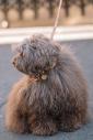 MEMPHIS CONFETTI DOG COLLAR/Mサイズ