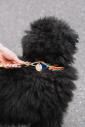 BLOCK PARTY DOG COLLAR/XSサイズ